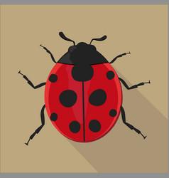 ladybug isolated flat style vector image