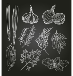 Culinary Herbs and Spices Vintage vector