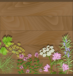 flowering herbs on wooden background vector image