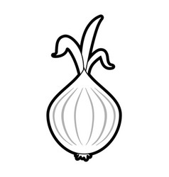 garlic food silhouette vector image