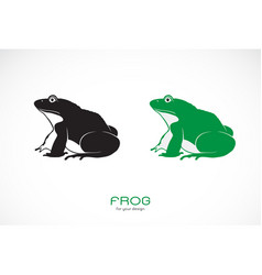 green frogs and black frog on white background vector image