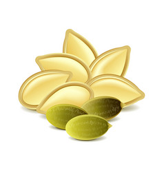 Pumpkin seeds isolated on white vector image