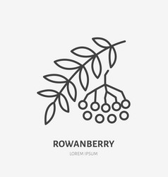 Rowanberry flat line icon rowan sign healthy vector