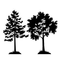 silhouette trees pine and maple vector image