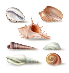 set of seashells of various vector image vector image