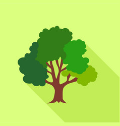 big fluffy tree icon flat style vector image vector image