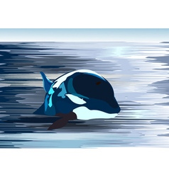 Killer Whale Drawing vector