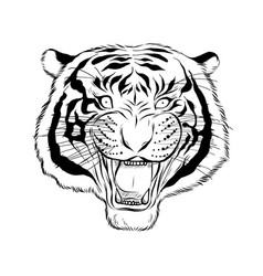 hand drawn head tiger vector image