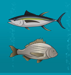Common tune and seabream vector