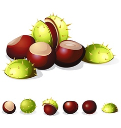 Chestnuts isolated on white background vector