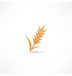 Ears of Wheat Barley or Rye visual graphic icons vector image vector image