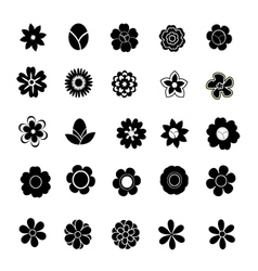 Floral on white background vector image