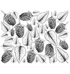 Hand drawn of fresh boysenberry on white backgroun vector