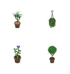 Isometric houseplant set of blossom flower tree vector