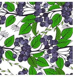 Seamless pattern with branches of chokeberry vector