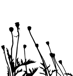 wild plant and flower silhouettes vector image