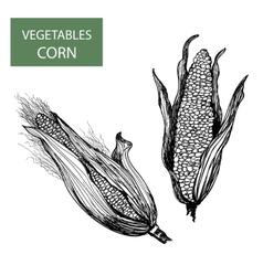 Corn-set of vector image vector image