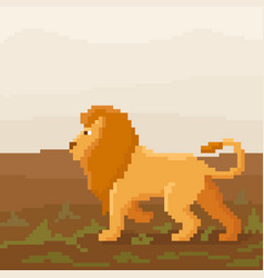 Cute pixel lion is walking on a savanna vector