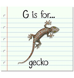 Flashcard letter G is for gecko vector image