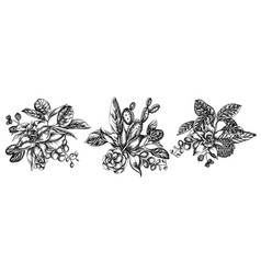 flower bouquet black and white ficus iresine vector image