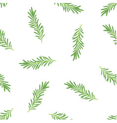 rosemary branches seamless pattern on white vector image
