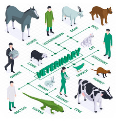 Veterinary isometric flowchart composition vector