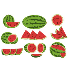 watermelon design vector image