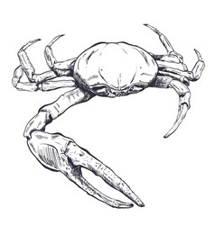 With a large sea crab-ghost drawn by vector