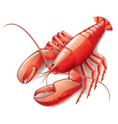 object lobster vector image vector image
