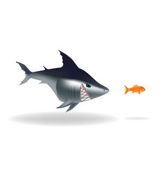 big scarry shark chasing goldfish vector image