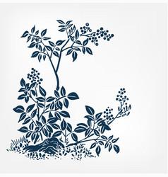 buckthorn honeysuckle ink sketch japanese chinese vector image