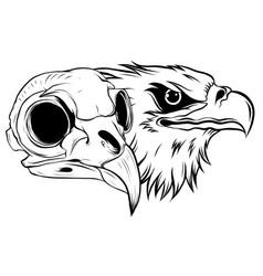 Cartoon a bird skull vector