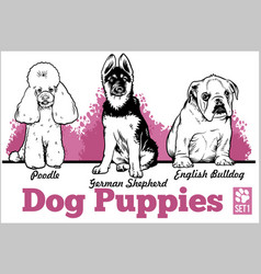 English bulldog poodle and german shepherd - dog vector