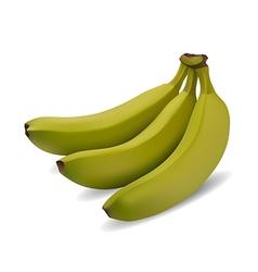 green banana bundle vector image vector image