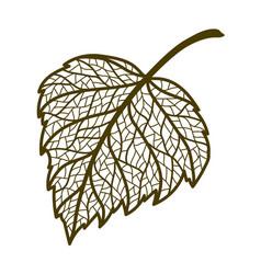 Autumn birch leaf vector