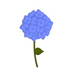 isolated hydrangea flower icon vector image