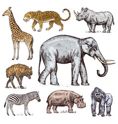 set african animals rhinoceros elephant vector image