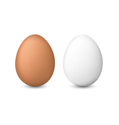 White and brown chicken eggs vector