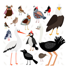 birds collection isolated on white background vector image vector image