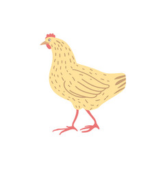chicken hand drawn vector image