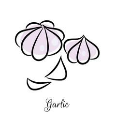 Garlic hand drawn doodle icon vector