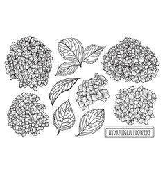Hand drawn floral decoration vector