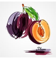 plum fruits vector image