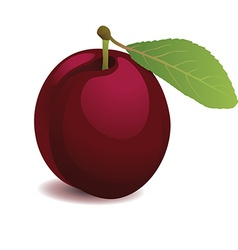Plum with leaf vector