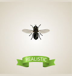 Realistic fly element of vector