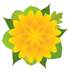 Yellow flower with leaves vector