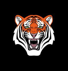 tiger head face portrait black background vector image