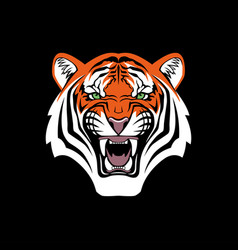 tiger head face portrait black backround vector image