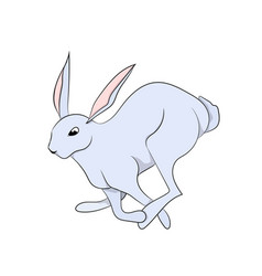 White hare white background vector