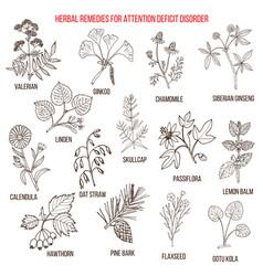 collection of herbs for attention deficit disorder vector image